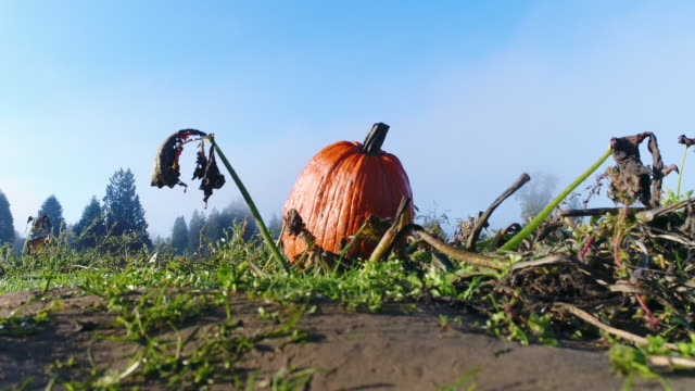 Pumpkin-Patch-October-Halloween-Title-Background-Ground-Blue-Sky