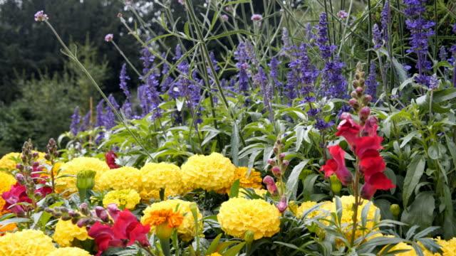 Cama-de-flores-en-el-parque-de-la-colina-de-Canon-Birmingham-