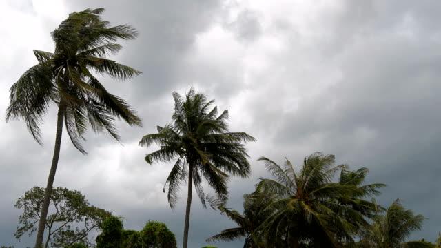 Fuertes-vientos-sacudieron-las-palmeras-de-coco-antes-de-una-tormenta-en-la-temporada-de-lluvias-de-Tailandia-