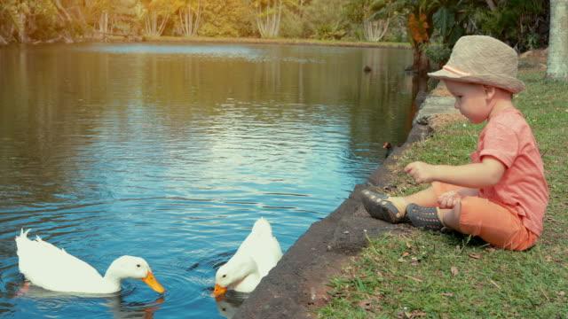 Cute-boy-feeding-water-birds-in-the-pond-slow-motion
