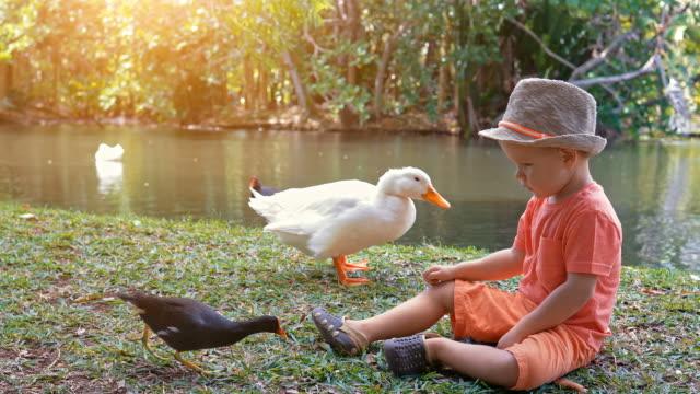 Cute-boy-feeding-water-birds-at-the-pond-slow-motion