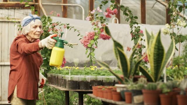 Anciana-de-fertilizar-las-plantas-en-invernadero