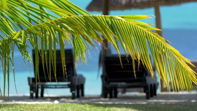 Summer-vacation-in-tropics