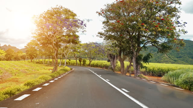 Riding-along-a-road-with-flowering-trees