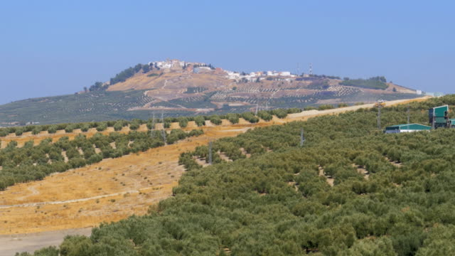 Landscape-view-of-the-Olive-Fields-in-the-Desert-of-Spain