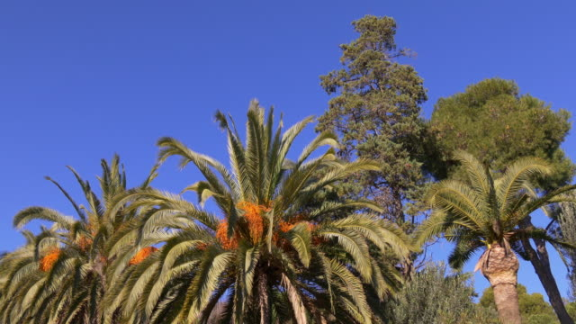 barcelona-día-soleado-date-palm-vista-4-k-España