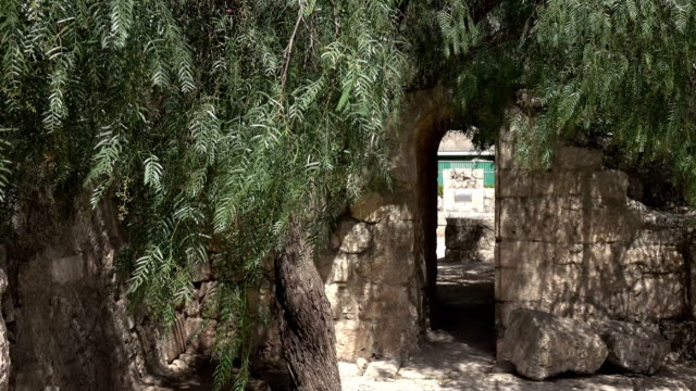 Olive-Tree-Guarding-Hidden-Entrance-to-Church-Courtyard