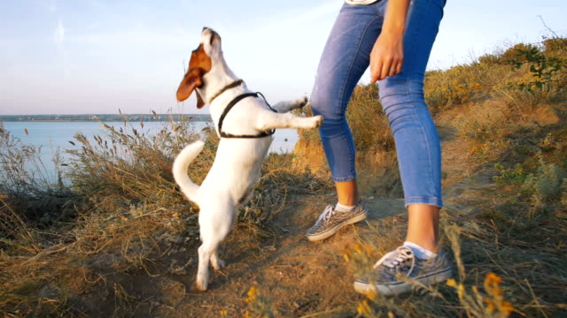 Young-attractive-woman-playing-with-a-dog-Jack-Russell-in-the-meadow-at-sunset-with-sea-background-slow-motion