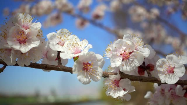 Spring-flowers-blooming-Slow-motion