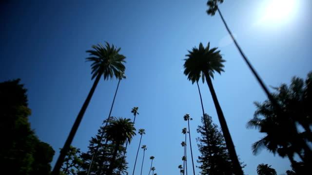 Palm-Tree-Drive