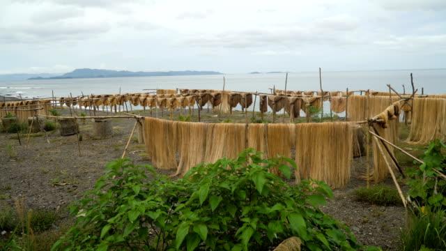 Drying-palm-fibers