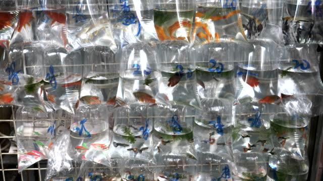 captura-de-peces-tropicales-en-bolsas-en-los-mercados-de-mongkok-en-hong-kong