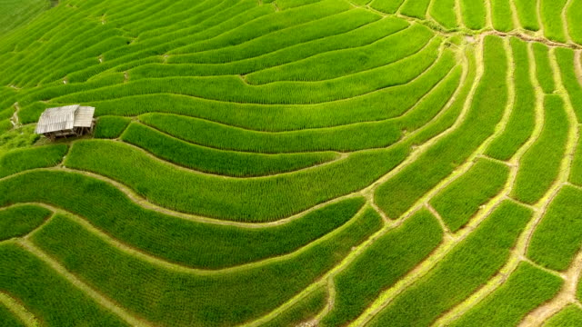 Rice-field-terrace-on-mountain-agriculture-land-