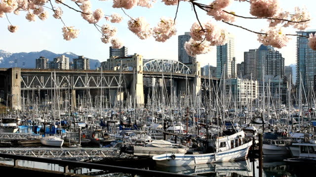 Burrard-Bridge-Spring-Blossoms-Vancouver