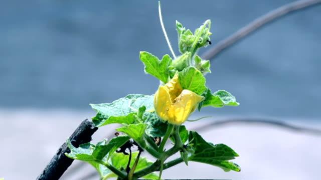 Gelbe-Farbe-Blumen-Hintergrund-mit-green-leafs