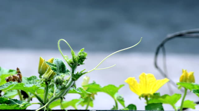Yellow-color-flower-with-green-leafs-background