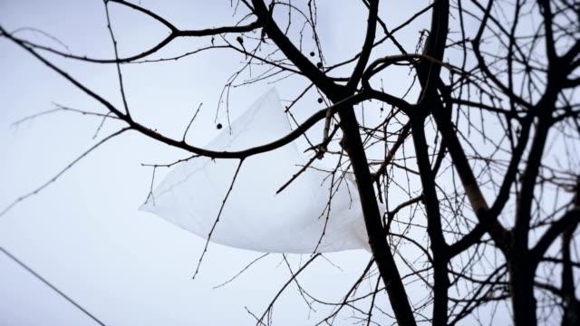 Bolsa-de-plástico-desechada-atrapado-en-las-ramas-de-un-árbol-imágenes-de-archivo-