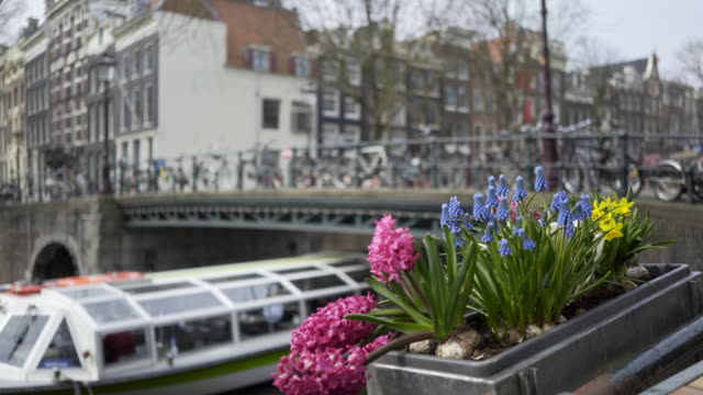 Street-of-Amsterdam-decorated-flowers