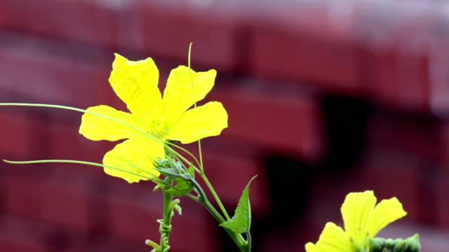 Balanceo-de-flor-del-viento