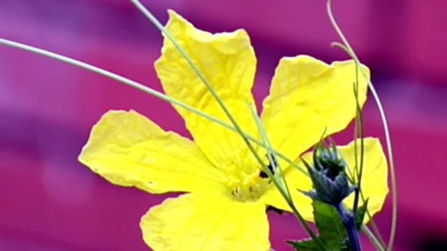 Flor-Pollens