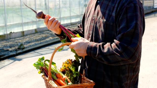 Hombre-control-remolacha-vegetales-4k