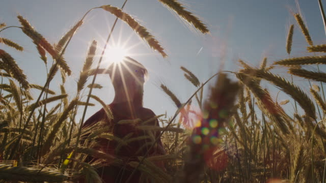 Permanente-adultos-en-el-hermoso-campo-de-trigo-con-cielo-azul-y-sol-épico-luz---tiro-en-rojo