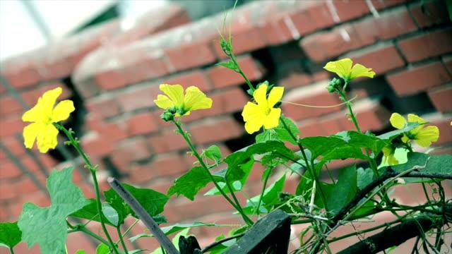 Flower-swinging-in-the-wind