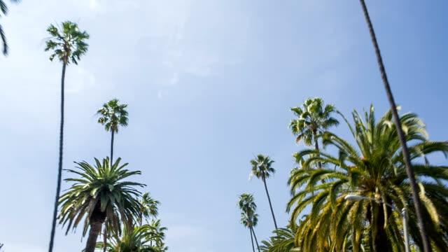 Palm-Palmen