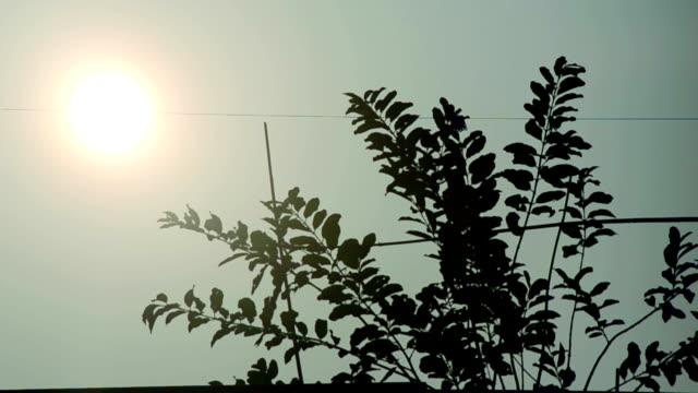 Sun-Among-the-clean-morning-sky