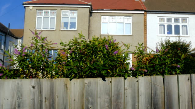Yard-Plants-Growing-Over-a-Wooden-Fence