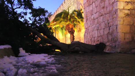 People-step-around-a-fallen-tree-in-Jerusalem-at-dusk-following-a-rare-snow-fall
