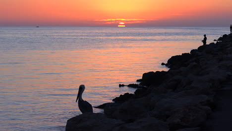 A-fisherman-and-a-pelican-stand-in-silhouette-at-sunset-along-an-ocean-coastline