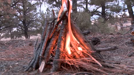 Close-up-of-a-campfire-in-a-forest