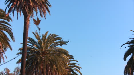Helicopter-Marine-One-carrying-President-Barak-Obama-flies-in-the-skies-of-California-1