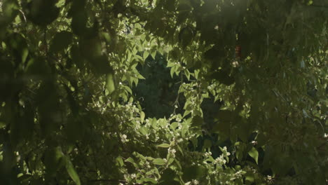 A-perspective-looking-up-at-the-green-canopy-of-a-forest-in-sunlight