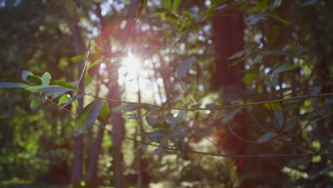 The-sun-filters-through-leaves-in-a-forest