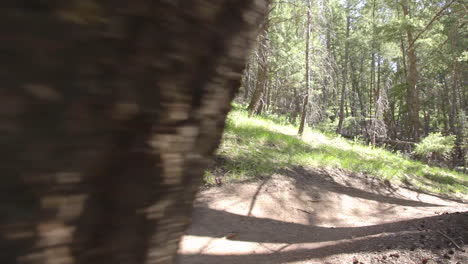 A-mountain-biker-pedals-through-a-forested-area-at-high-speed-1