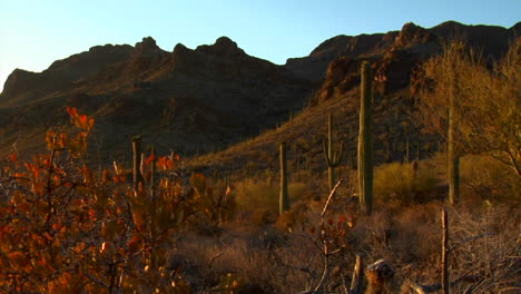 The-Mexico-Arizona-Baja-or-Mojave-desert-studded-with-cactus