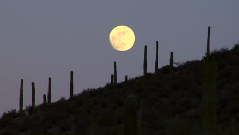 The-moon-sets-behind-the-Mexico-Arizona-Baja-or-Mojave-desert-studded-with-cactus