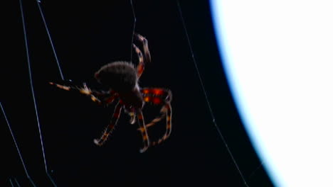 Close-up-of-a-spider-building-a-web-1