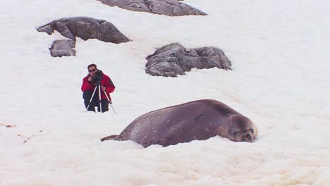 A-man-photographs-an-elephant-seal-on-an-icefield-in-the-Arctic-