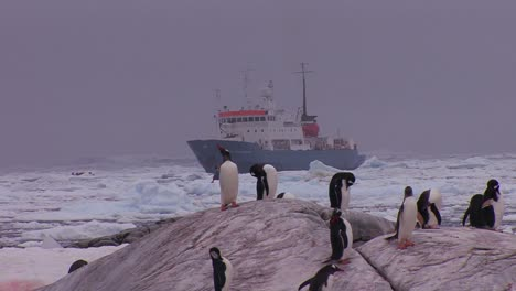 An-oceanic-research-vessel-floats-amongst-icebergs-in-Antarctica-2