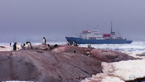 An-oceanic-research-vessel-floats-amongst-icebergs-in-Antarctica-as-penguins-look-on