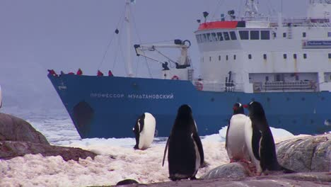 An-oceanic-research-vessel-floats-amongst-icebergs-in-Antarctica-as-penguins-look-on-1