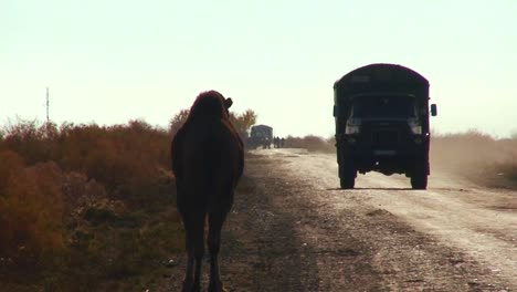 An-old-Soviet-era-cargo-truck-passes-on-a-road-into-Muynaq-in-Kazakhstan-or-Uzbekistan-passing-camels