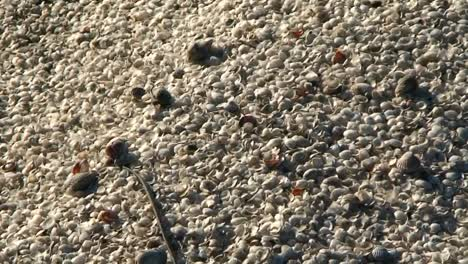 Millions-of-tiny-seashells-illustrate-the-ecological-disaster-that-is-the-Aral-Sea-in-Kazakhstan-or-Uzbekistan