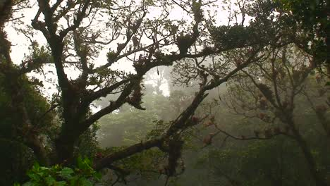 Fog-and-mist-blows-through-a-mountaintop-rainforest-in-Costa-Rica