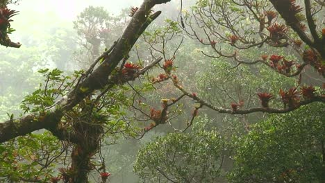 Fog-and-mist-blows-through-a-mountaintop-rainforest-in-Costa-Rica-1