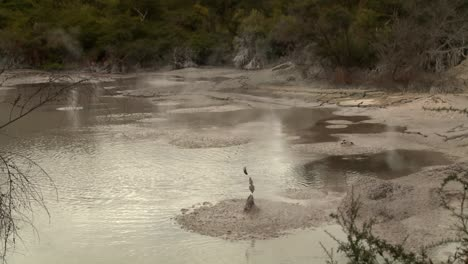 Hot-pools-of-bubbling-mud-are-a-feature-of-New-Zealand-s-Rotorua-region-1