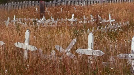Grass-grows-in-a-derelict-cemetery